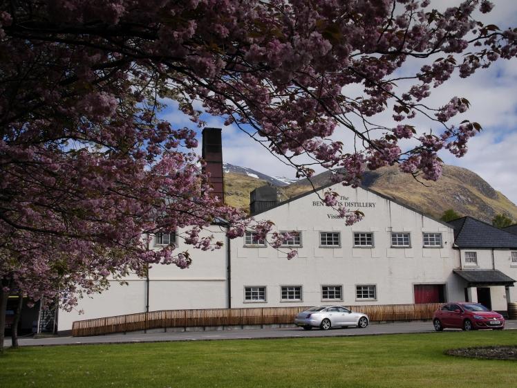 spring time Ben Nevis Distillery 2