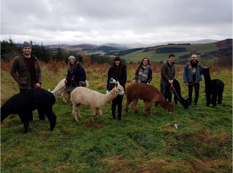 Alpaca party (credit and copyright: Hannah Reid)